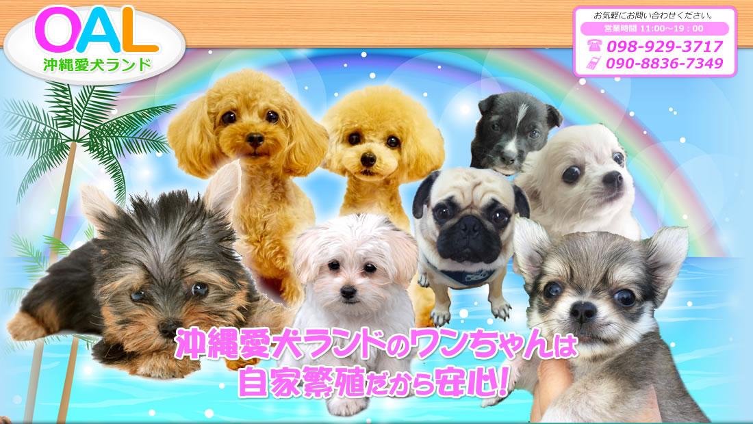 沖縄ペットショップ愛犬ランド